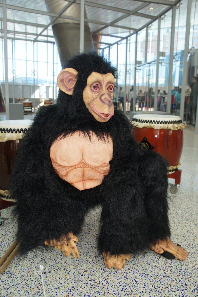 обезьяны мира