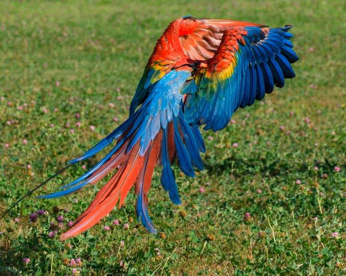 Ручные попугаи ара,жако,какаду